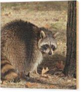 Raccoon #4 Wood Print