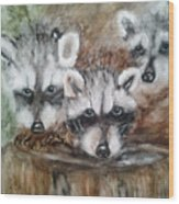 Raccoon Babies By Christine Lites Wood Print