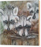 Raccoon Babies By Christine Lites Wood Print by Allen Sheffield