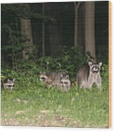 Raccoon Family Wood Print