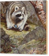 Raccoon Found Treasure  Wood Print
