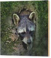 Raccoon In A Log Wood Print