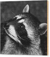 Raccoon Looking Wood Print