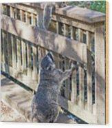 Raccoon Shenanigans Wood Print