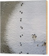 Raccoon Tracks On Palouse River Wood Print
