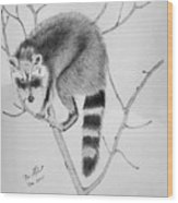 Raccoon Treed  Wood Print