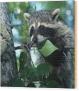 Raccoon--up We Go Wood Print