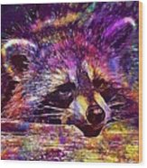 Raccoon Wild Animal Furry Mammal  Wood Print