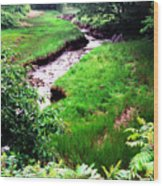 Rachel Carson National Wildlife Refuge Wood Print by Thomas R Fletcher