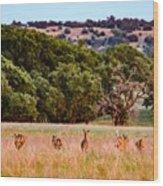 Nine Racing Whitetail Deer Wood Print
