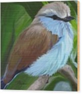 Racket-tailed Roller Wood Print