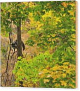 Racoon In Fall Trees Wood Print
