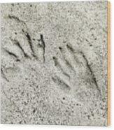 Racoon Tracks At The River Wood Print