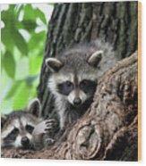 Racoons In Tree Wood Print