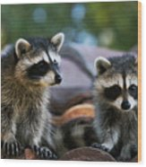 Racoons On The Roof Wood Print