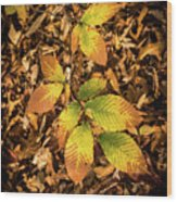 Radiant Beech Leaf Branches Wood Print