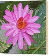 Radiant Pink Wood Print