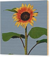 Radiant Sunflower Wood Print