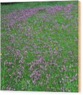 Ragged Robin IIi Wood Print