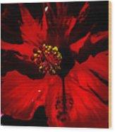Raging Red Hibiscus Wood Print