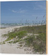 Railroad Vine And Sea Oats On The Atlantic In Florida Wood Print