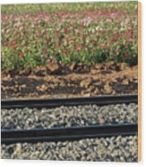 Rails And Roses Wood Print