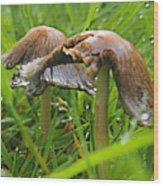 Rain Bombarding Mushroom Settlement. Wood Print