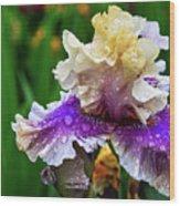 Rain Coated Multi Colored Iris Wood Print