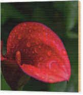 Rain Coated Red Anthurium Wood Print