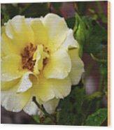 Rain Coated Yellow Rose Wood Print