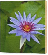 Rain Drenched Blue Lotus In Grand Cayman Wood Print
