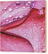 Rain Drop Jewels  Wood Print