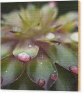 Rain Drop On Cactus Wood Print