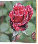 Rain Drop Rose Wood Print