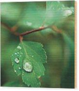 Rain Droplet On Leaf Wood Print