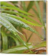 Rain Droppe1 Wood Print