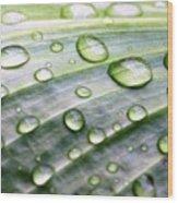 Rain Drops On A Leaf Wood Print