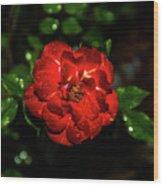 Rain Drops On A Rose Wood Print