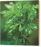 Rain Drops On Green Leaves Wood Print