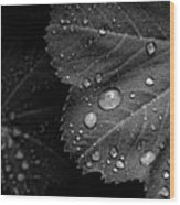 Rain Drops On Leaf Wood Print