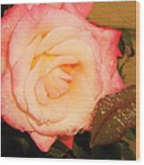Rain Flower Rose Wood Print