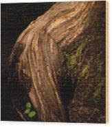 Rain Forest Light Wood Print