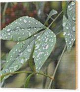 Rain Leaf Wood Print