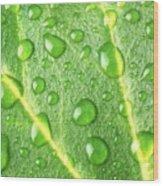 Rain On A Leaf Wood Print