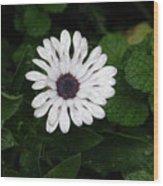 Rain On A White Flower Wood Print