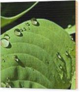 Rain On Leaf Wood Print