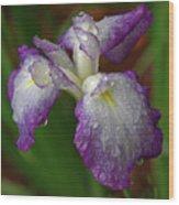 Rain-soaked Iris Wood Print