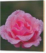 Rain Spattered Rose Wood Print