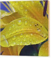 Rain Spotted Yellow Lily I 2009 Wood Print