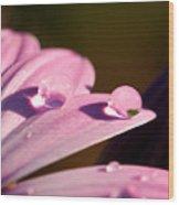 Rain Water On Daisy One Wood Print